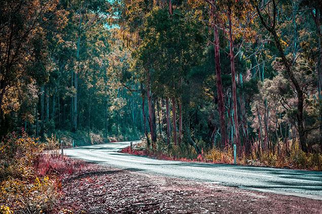 Mallacoota bushland